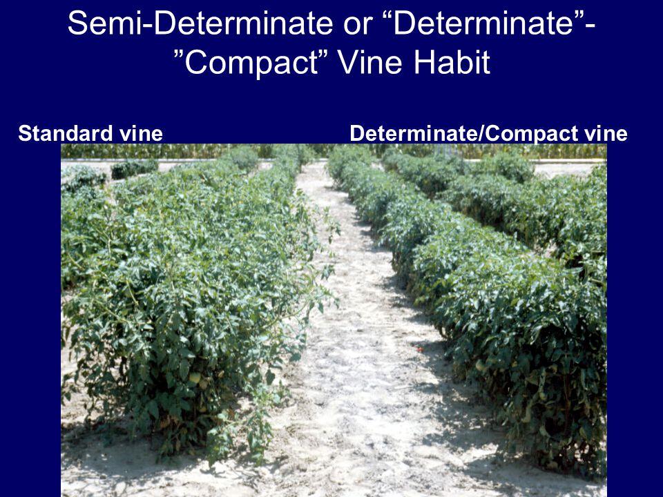 Semi-Determinate or Determinate - Compact Vine Habit Standard vineDeterminate/Compact vine
