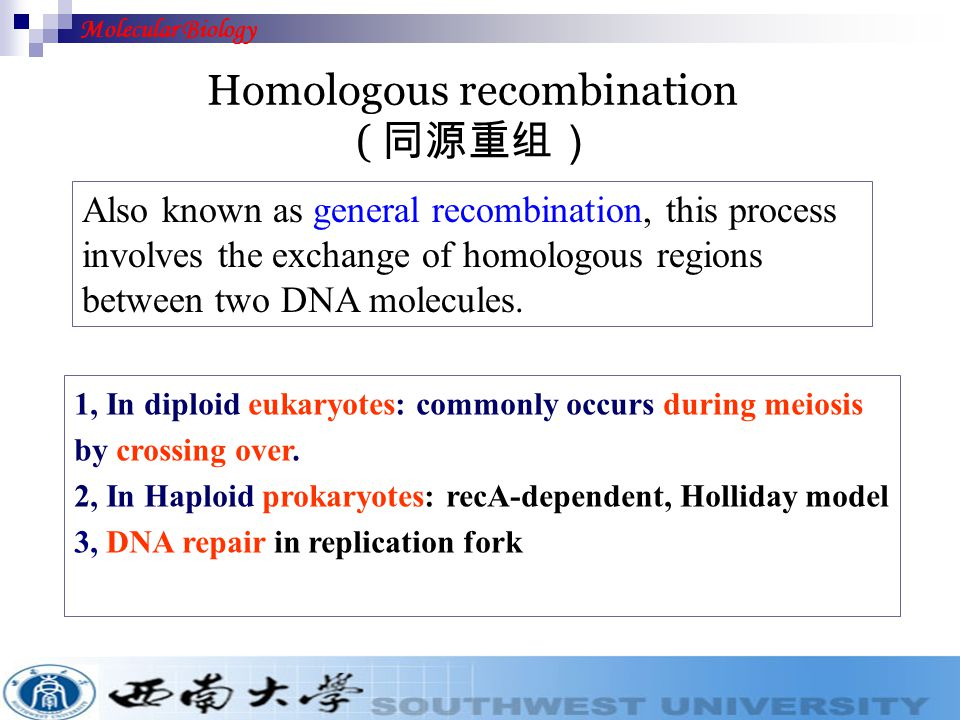 Includes homologous recombination, site-specific recombination and transposition.