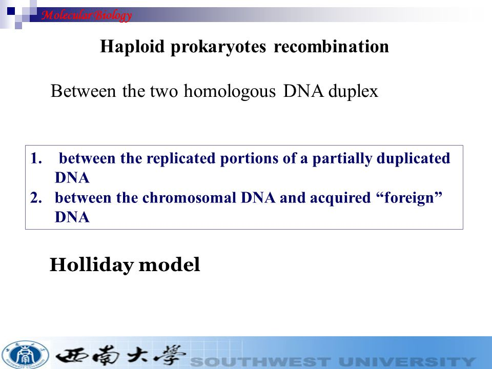 Homologous recombination ( 同源重组) 1, In diploid eukaryotes: commonly occurs during meiosis by crossing over.