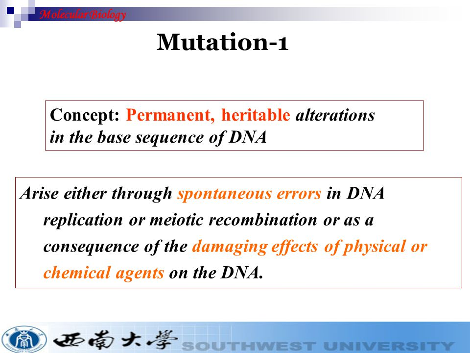 Mutation Replication Fidelity ( 复制的忠实 性) Mutagens Mutagenesis (突变) (诱变剂) Molecular Biology