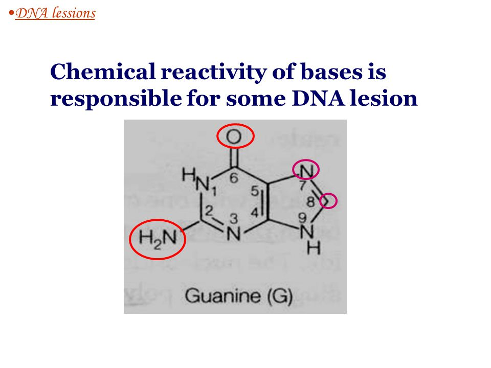 Spontaneous DNA lesions 1.Inherent chemical reactivity of the DNA 2.The presence of normal, reactive chemical species within the cell 1.Deamination ( 转氨作用) : C  UC  U methylcytosine  T, hard to be detected 2.Depurination ( 脱瞟呤作用 ) : break of the glycosylic bond, non-coding lesion.