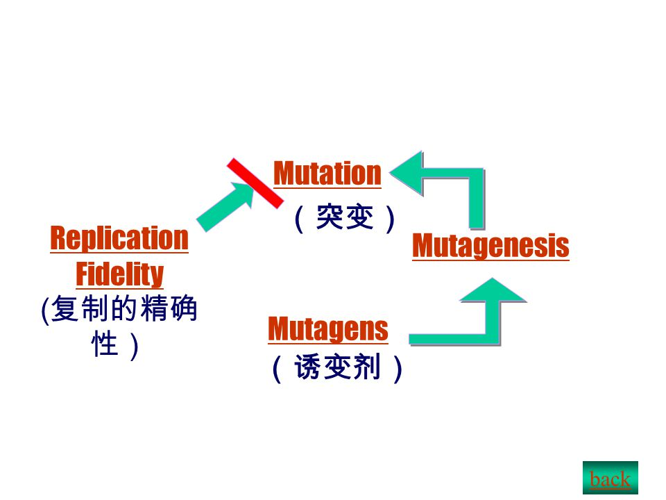 DNA damage, repair & recombination F1F1 Mutagenesis ( 诱变) F1F1 Mutagenesis ( 诱变) Mutation Replication fidelity Mutagens: chemical & physical Mutagenesis: direct & indirect