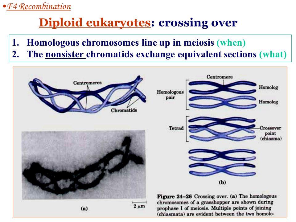 F4-1 Homologous recombination ( 同源重组) Diploid eukaryotes: crossing over Haploid prokaryotes: recA-dependent, Holliday model DNA repair in replication fork DNA damage, repair & recombination The exchange of homologous regions between two DNA moleculs