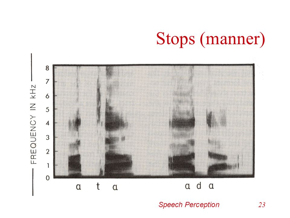 Speech Perception22 Stops (manner) Cues for manner –Oral occlusion is heard either as a … Silence in the voiceless stop /p-t-k/ Brief attenuation of s
