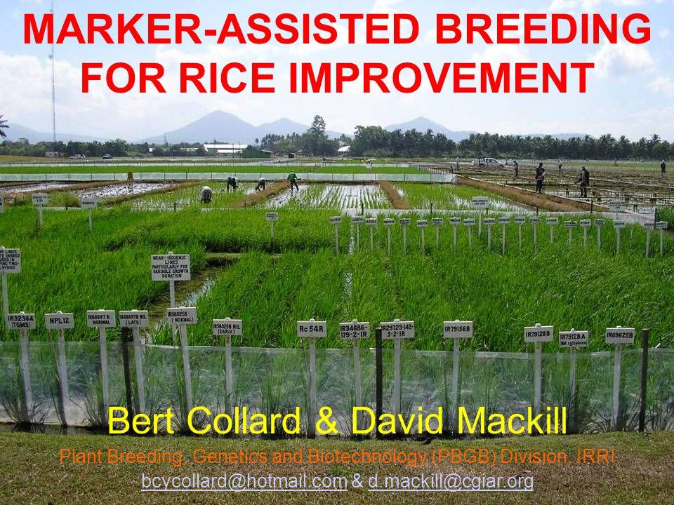 MARKER-ASSISTED BREEDING FOR RICE IMPROVEMENT Bert Collard & David Mackill Plant Breeding, Genetics and Biotechnology (PBGB) Division, IRRI bcycollard@hotmail.combcycollard@hotmail.com & d.mackill@cgiar.orgd.mackill@cgiar.org