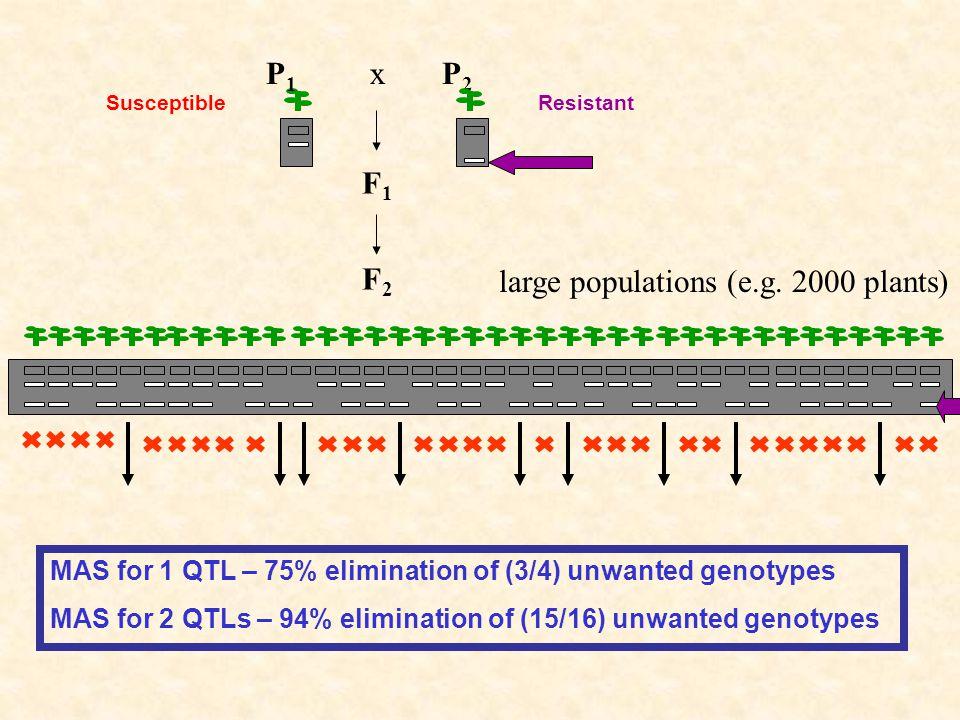 F2F2 P2P2 F1F1 P1P1 x large populations (e.g.