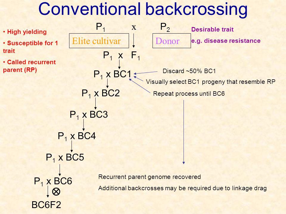 Conventional backcrossing x P2P2 P1P1 DonorElite cultivar Desirable trait e.g.
