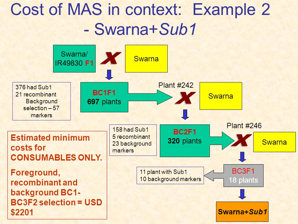 Cost of MAS in context: Example 2 - Swarna+Sub1 Swarna/ IR49830 F1 Swarna BC1F1 697 plants Plant #242 Swarna 376 had Sub1 21 recombinant Background selection – 57 markers 158 had Sub1 5 recombinant 23 background markers BC2F1 320 plants Estimated minimum costs for CONSUMABLES ONLY.