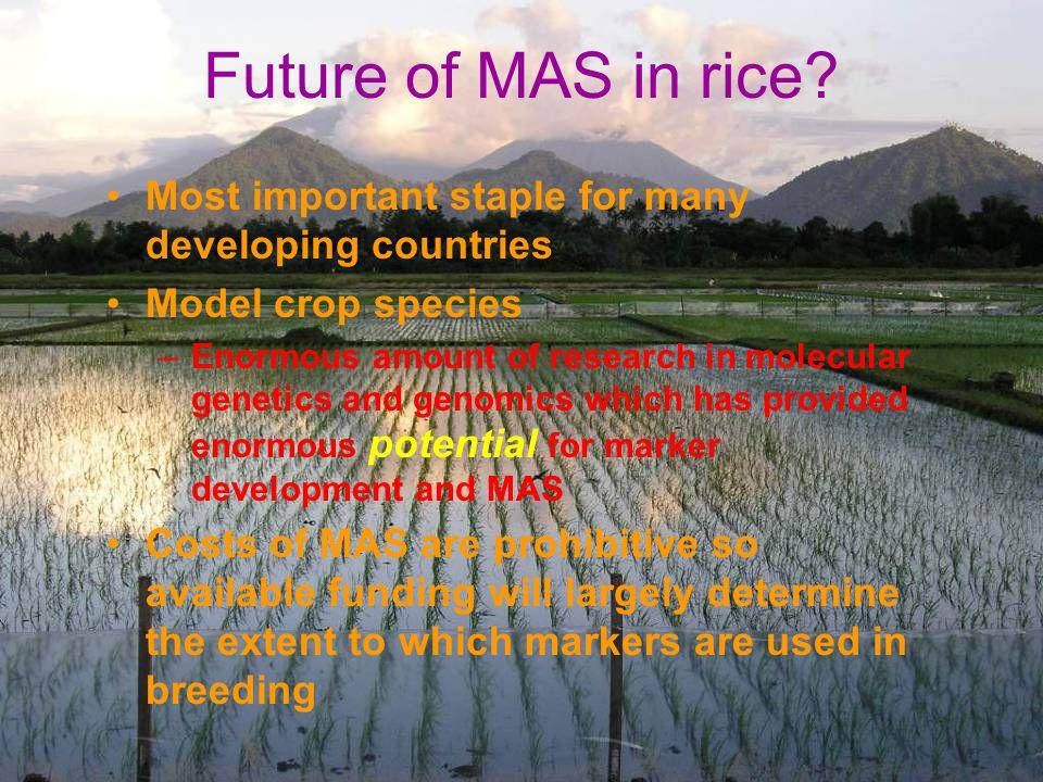 Future of MAS in rice.