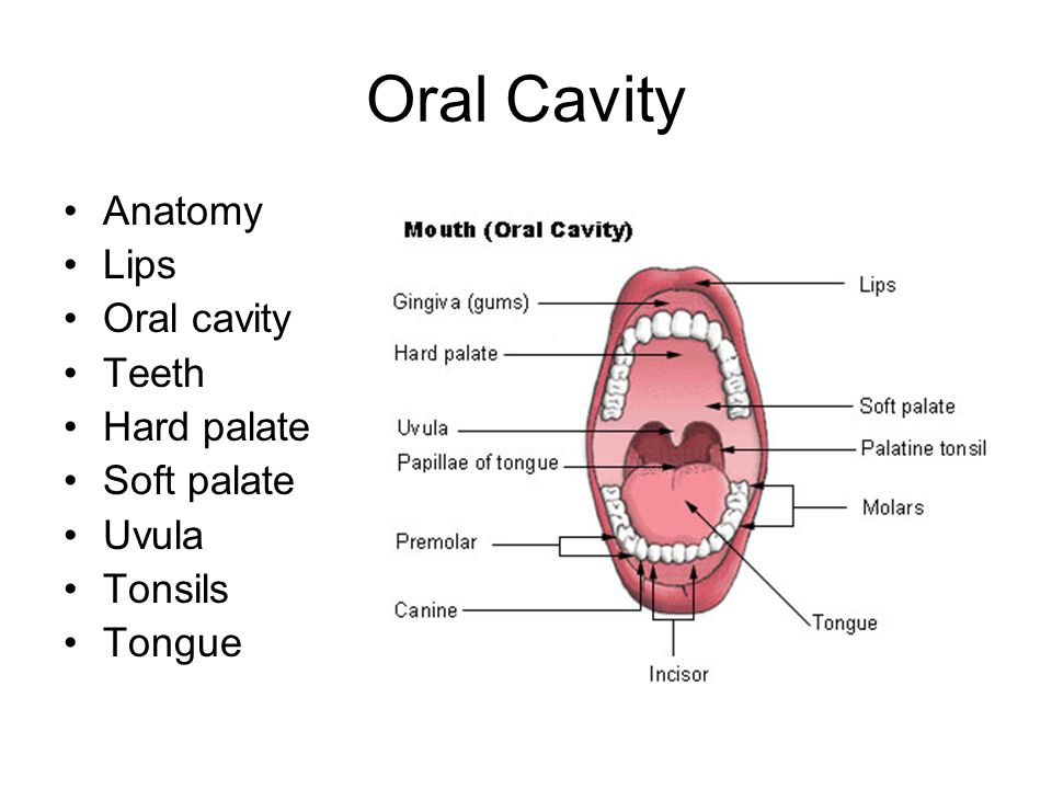 Oral Cavity Anatomy Lips Oral cavity Teeth Hard palate Soft palate Uvula Tonsils Tongue