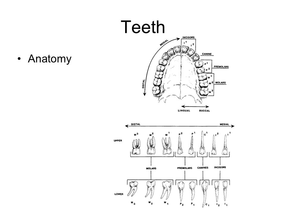 Dental Occlusion Types