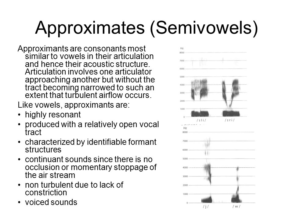 Approximates (Semivowels) Approximants are consonants most similar to vowels in their articulation and hence their acoustic structure.