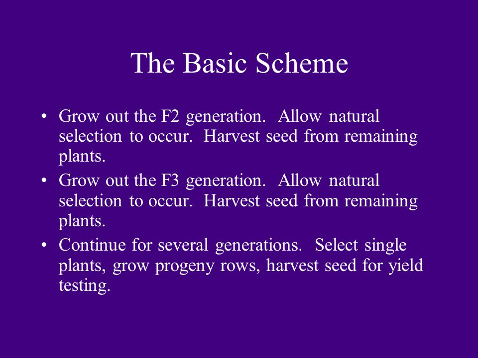 The Basic Scheme Grow out the F2 generation. Allow natural selection to occur. Harvest seed from remaining plants. Grow out the F3 generation. Allow n