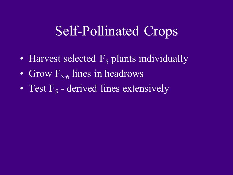 Self-Pollinated Crops Harvest selected F 5 plants individually Grow F 5:6 lines in headrows Test F 5 - derived lines extensively