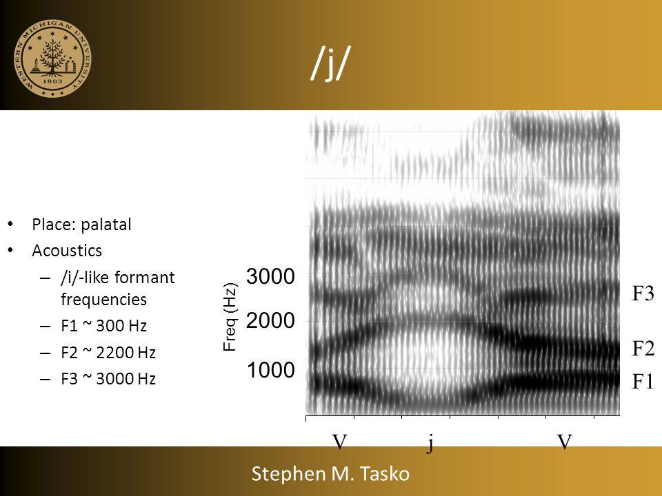 /j/ Place: palatal Acoustics – /i/-like formant frequencies – F1 ~ 300 Hz – F2 ~ 2200 Hz – F3 ~ 3000 Hz VjV F1 F2 F3 1000 2000 3000 Freq (Hz) Stephen M.