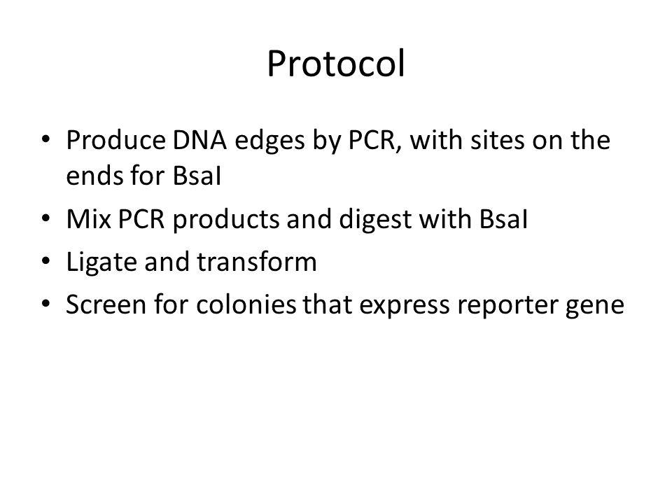 Detractor Edges are not segments of Reporter Gene Node1 Node 3' GGAC CCG…ATC GGC…TAG AGCC Node 2 Node 4' TCGG CCG…ATC GGC…TAG AACC