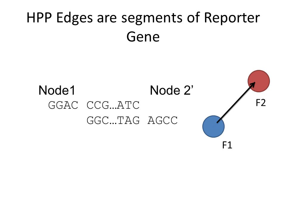Reporter Gene EcoRIPstI A B C D 1 2 3 Β-subunit of β-Galactosidase gene Using five numbered nodes, four gene sections are produced, A-D These will have sticky ends to combine the DNA strands together, and only the correct sequence of ABCD will produce the blue glow when placed in E.