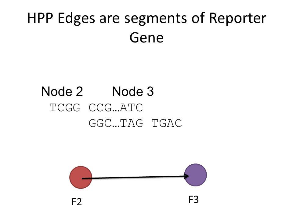 HPP Edges are segments of Reporter Gene Node1 Node 2' GGAC CCG…ATC GGC…TAG AGCC F1 F2