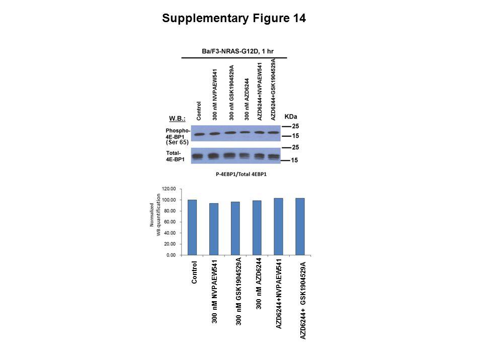 Supplementary Figure 14 Control 300 nM NVPAEW541 300 nM GSK1904529A 300 nM AZD6244 AZD6244+NVPAEW541 AZD6244+ GSK1904529A (Ser 65)