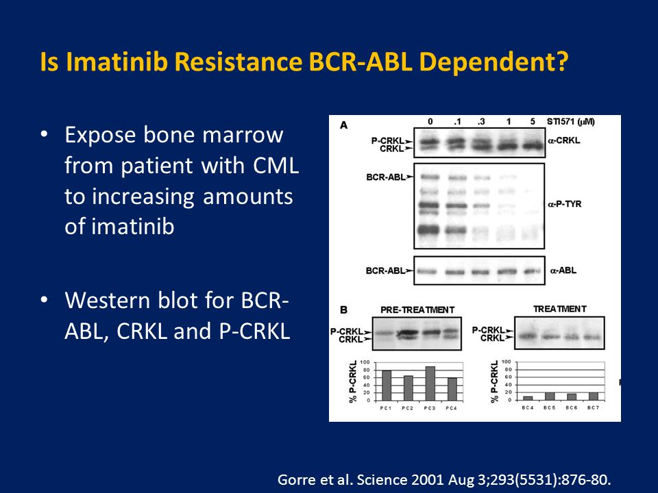 Is Imatinib Resistance BCR-ABL Dependent.