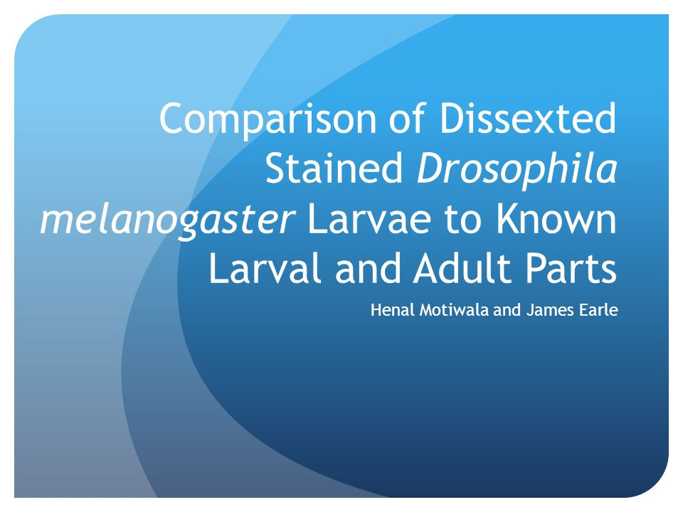 Comparison of Dissexted Stained Drosophila melanogaster Larvae to Known Larval and Adult Parts Henal Motiwala and James Earle