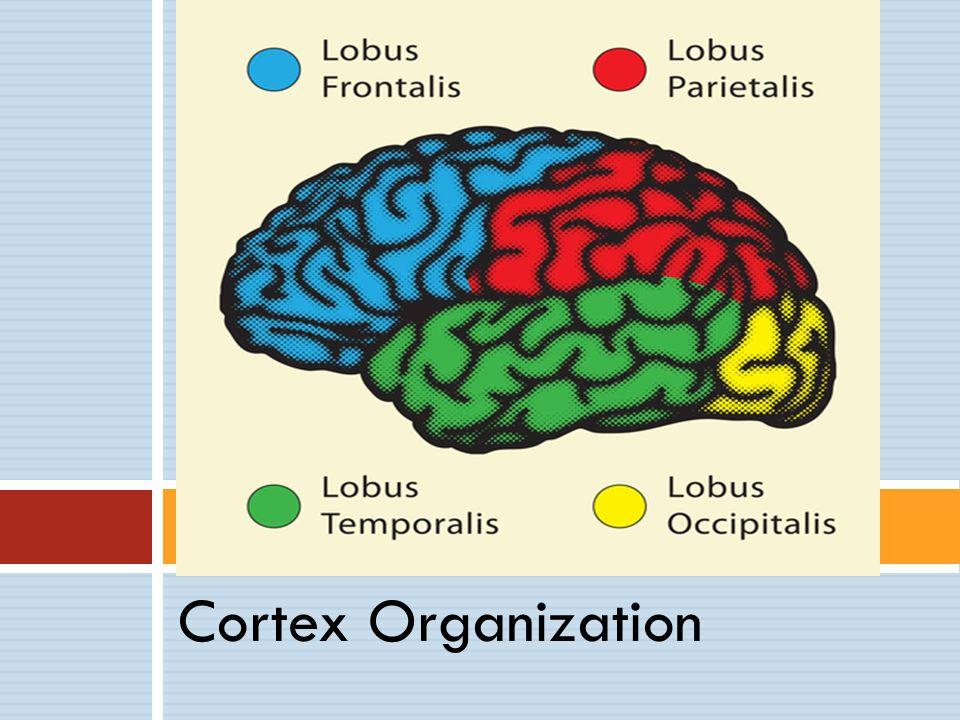 Chronic Pain  Studies identifying the dorsal anterior cingulate cortex (dACC)  fMRI feedback (DeCharmes et al, 2005)  Standardized Low Resolution Electromagnetic Tomography (sLORETA) (Ozier et al, 2008)  Implications for training at FZ or nearby (F1, F2)