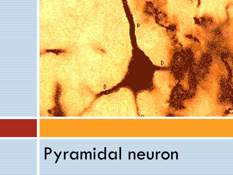 Neurofeedback is biofeedback for the brain EEG Neurofeed -back