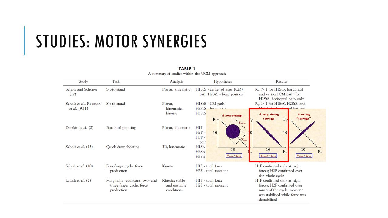 STUDIES: MOTOR SYNERGIES