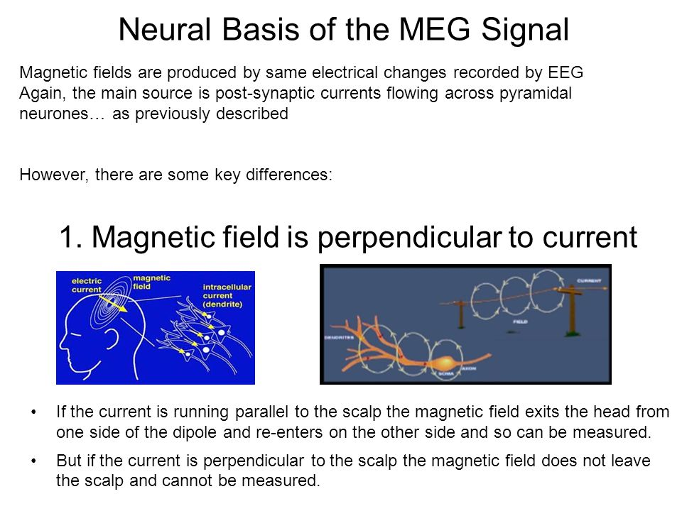 Neural Basis of the MEG Signal Magnetic fields are produced by same electrical changes recorded by EEG Again, the main source is post-synaptic currents flowing across pyramidal neurones… as previously described However, there are some key differences: 1.