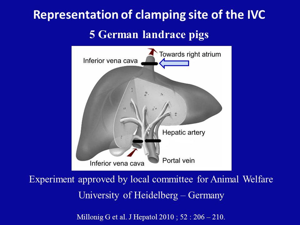 Representation of clamping site of the IVC 5 German landrace pigs Millonig G et al.