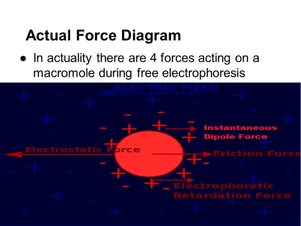 Actual Force Diagram ●In actuality there are 4 forces acting on a macromole during free electrophoresis