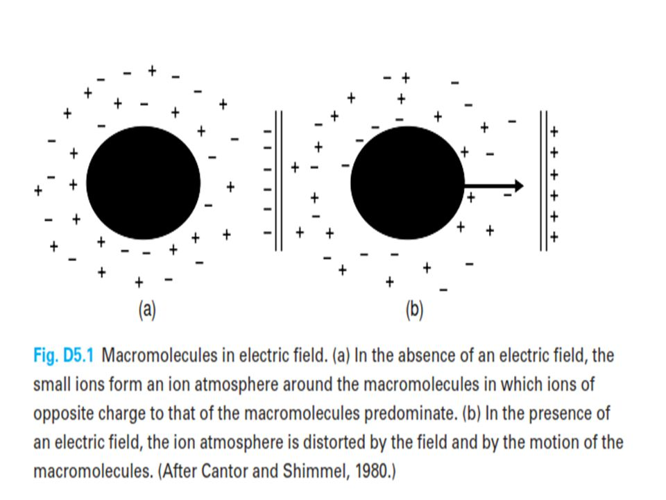 ●Consequently a realistic description of the electrophoretic mobility of any macromolecule must take into account the effects of: 1.the electric field on the charge Q of the molecule 2.its associated counterions 3.the ion atmosphere surrounding it.