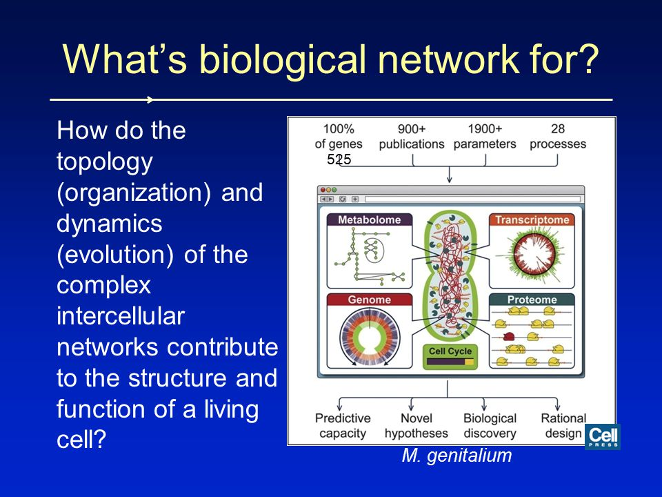 What's biological network for? How do the topology (organization) and dynamics (evolution) of the complex intercellular networks contribute to the str