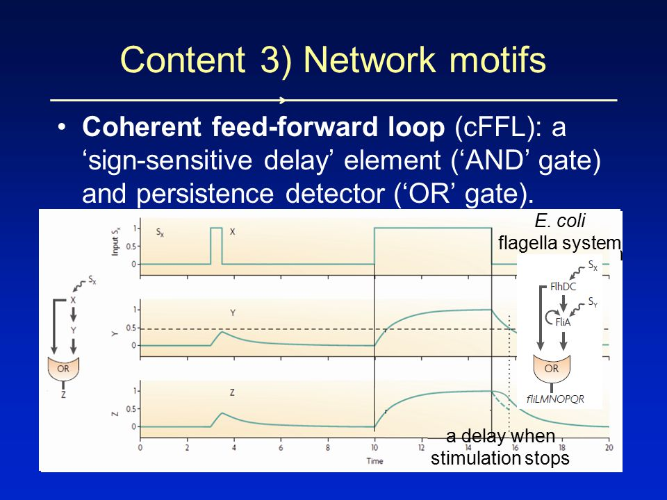 Coherent feed-forward loop (cFFL): a 'sign-sensitive delay' element ('AND' gate) and persistence detector ('OR' gate).