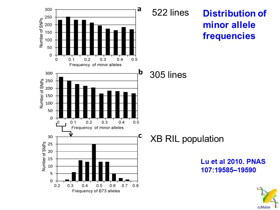 Distribution of minor allele frequencies 522 lines 305 lines XB RIL population Lu et al 2010. PNAS 107:19585–19590