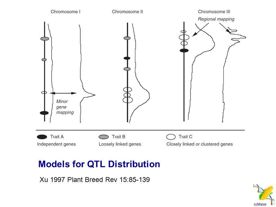 Models for QTL Distribution Xu 1997 Plant Breed Rev 15:85-139