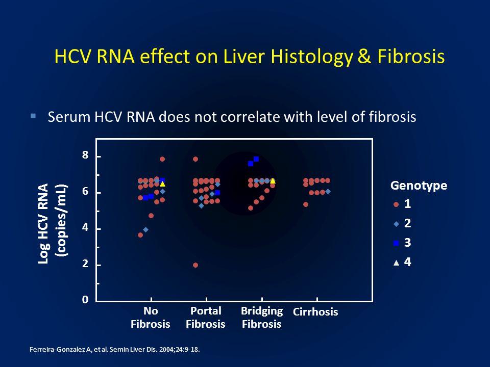 HCV RNA effect on Liver Histology & Fibrosis Genotype No Fibrosis Portal Fibrosis Bridging Fibrosis Cirrhosis  Serum HCV RNA does not correlate with