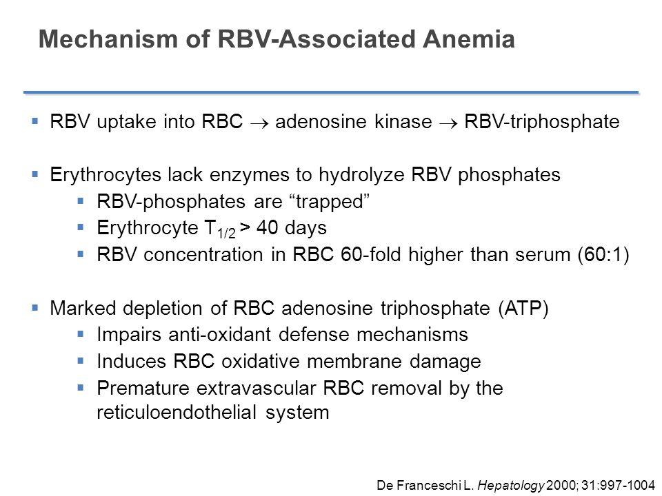 Mechanism of RBV-Associated Anemia  RBV uptake into RBC  adenosine kinase  RBV-triphosphate  Erythrocytes lack enzymes to hydrolyze RBV phosphates