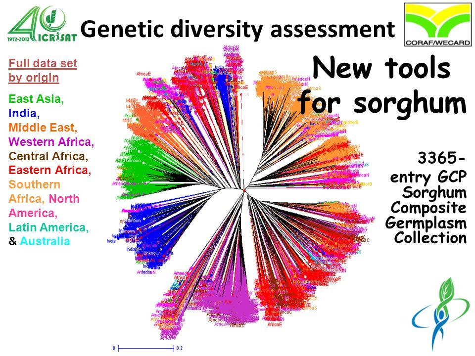 Genetic diversity assessment wild bicolor caudatum durra guinea margaritiferum kafir intermediate