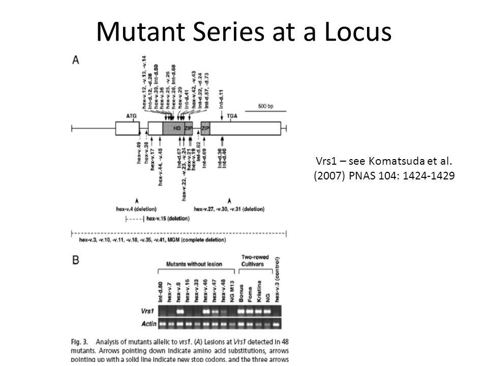 Mutant Series at a Locus Vrs1 – see Komatsuda et al. (2007) PNAS 104: 1424-1429