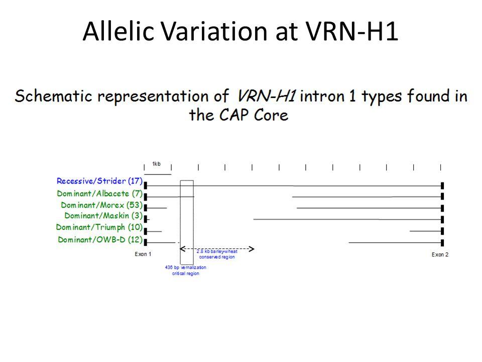 Allelic Variation at VRN-H1