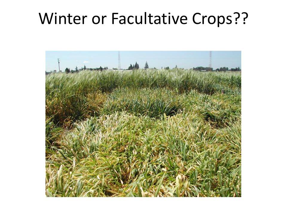 Winter or Facultative Crops??