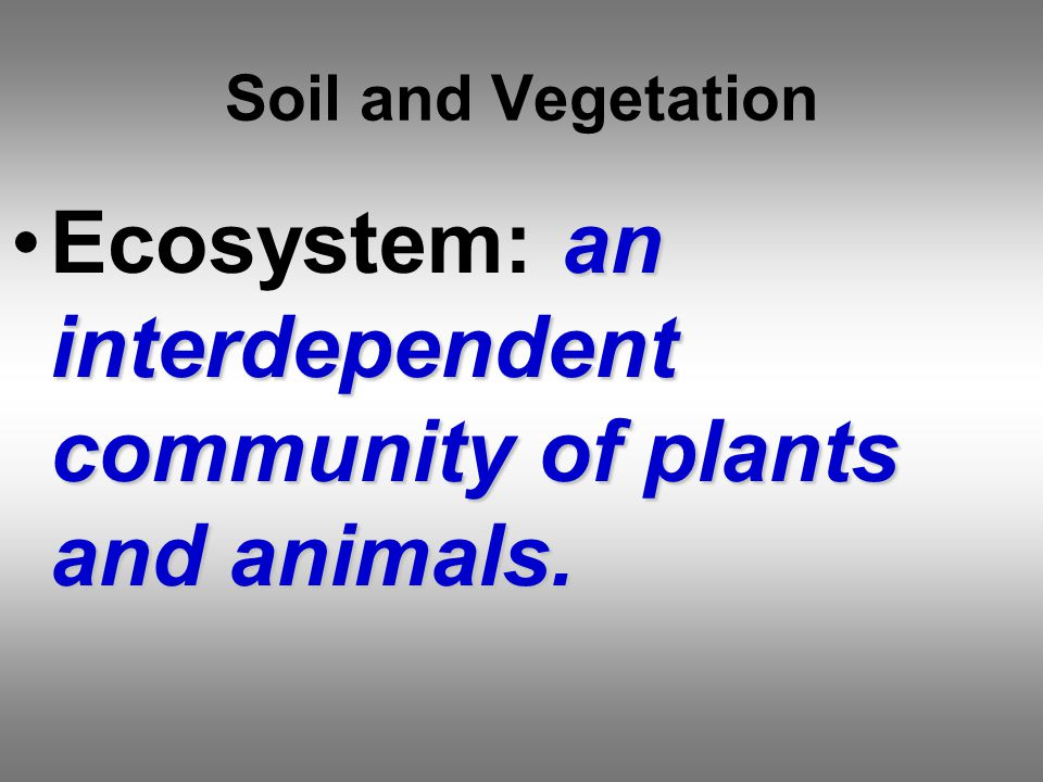 Soil and Vegetation an interdependent community of plants and animals.Ecosystem: an interdependent community of plants and animals.