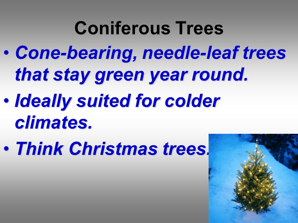 Coniferous Trees Cone-bearing, needle-leaf trees that stay green year round.Cone-bearing, needle-leaf trees that stay green year round.
