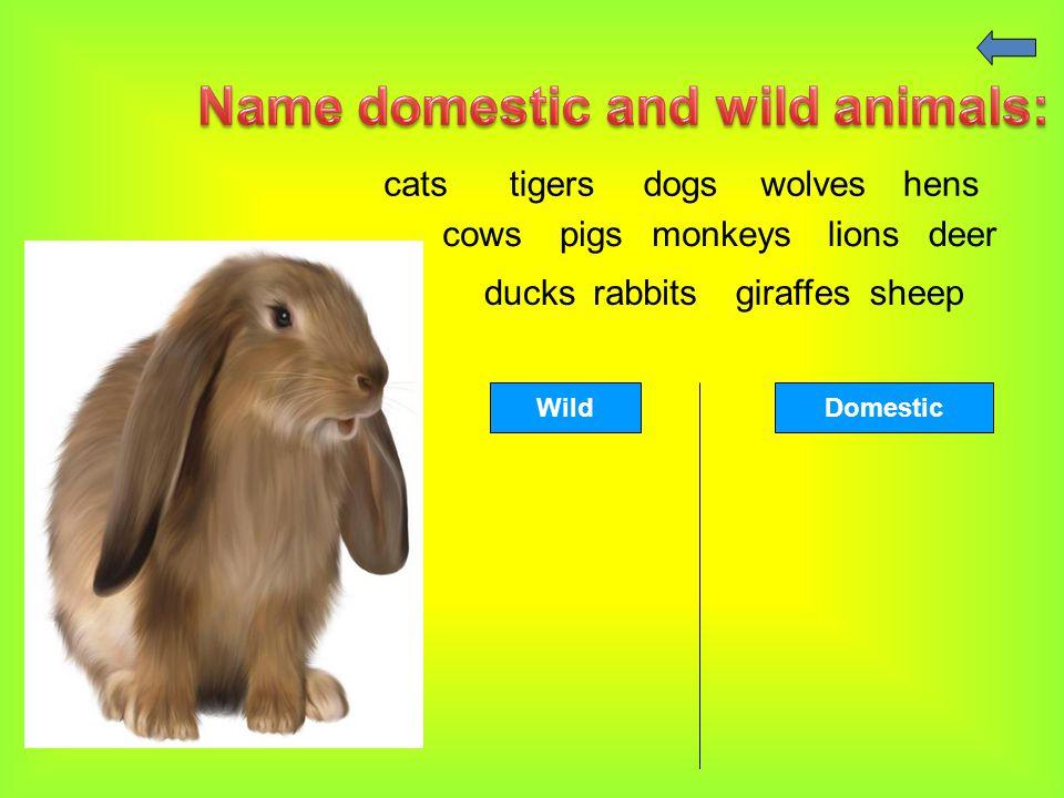 catstigersdogswolveshens cowspigsmonkeyslionsdeer ducksrabbitsgiraffessheep WildDomestic