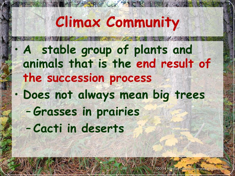 Climax Community A stable group of plants and animals that is the end result of the succession process Does not always mean big trees –Grasses in prairies –Cacti in deserts