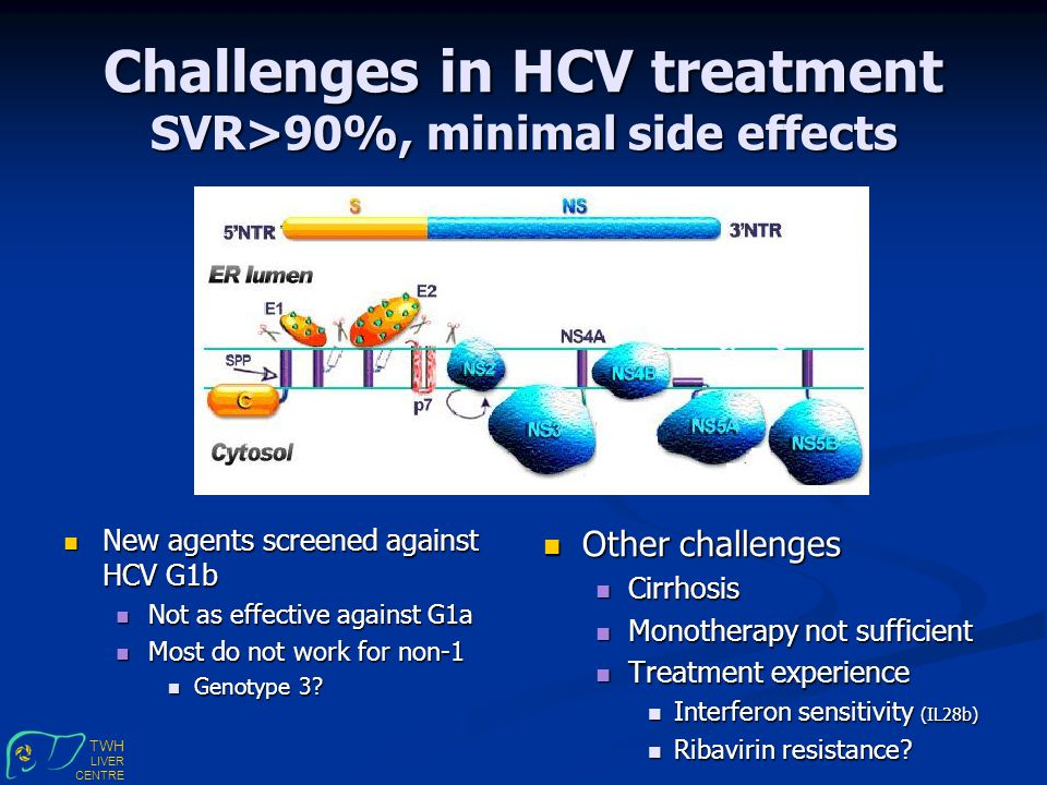 TWH LIVER CENTRE Challenges in HCV treatment SVR>90%, minimal side effects New agents screened against HCV G1b New agents screened against HCV G1b Not as effective against G1a Not as effective against G1a Most do not work for non-1 Most do not work for non-1 Genotype 3.