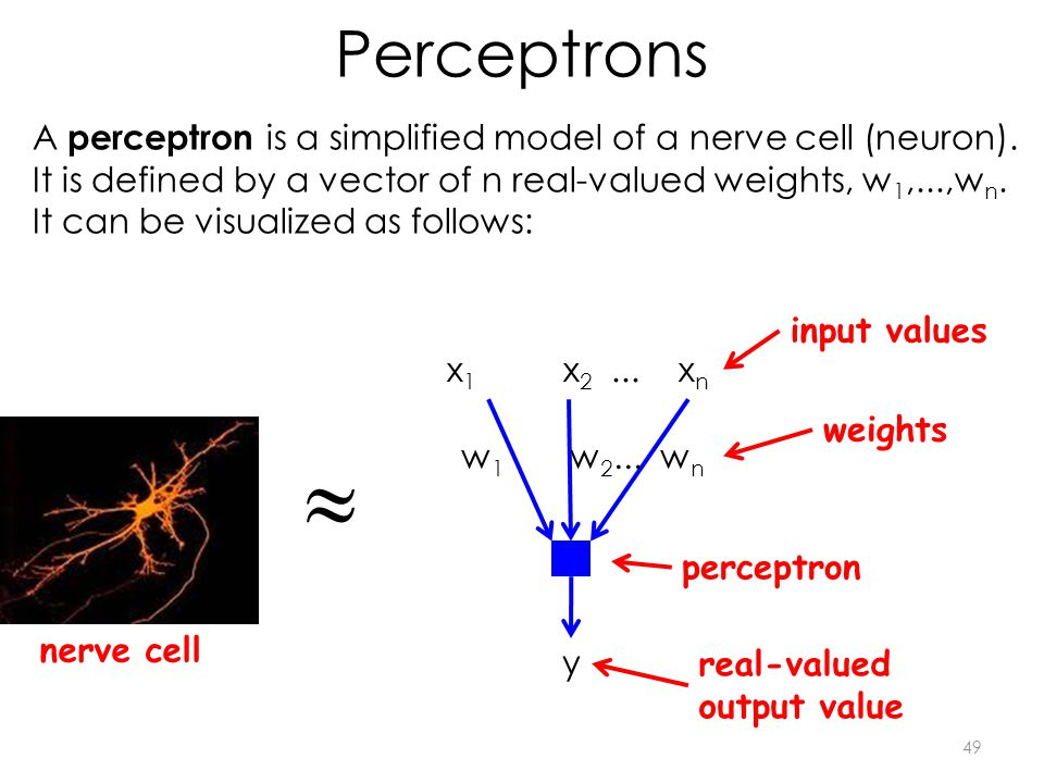 Perceptrons 49 A perceptron is a simplified model of a nerve cell (neuron).