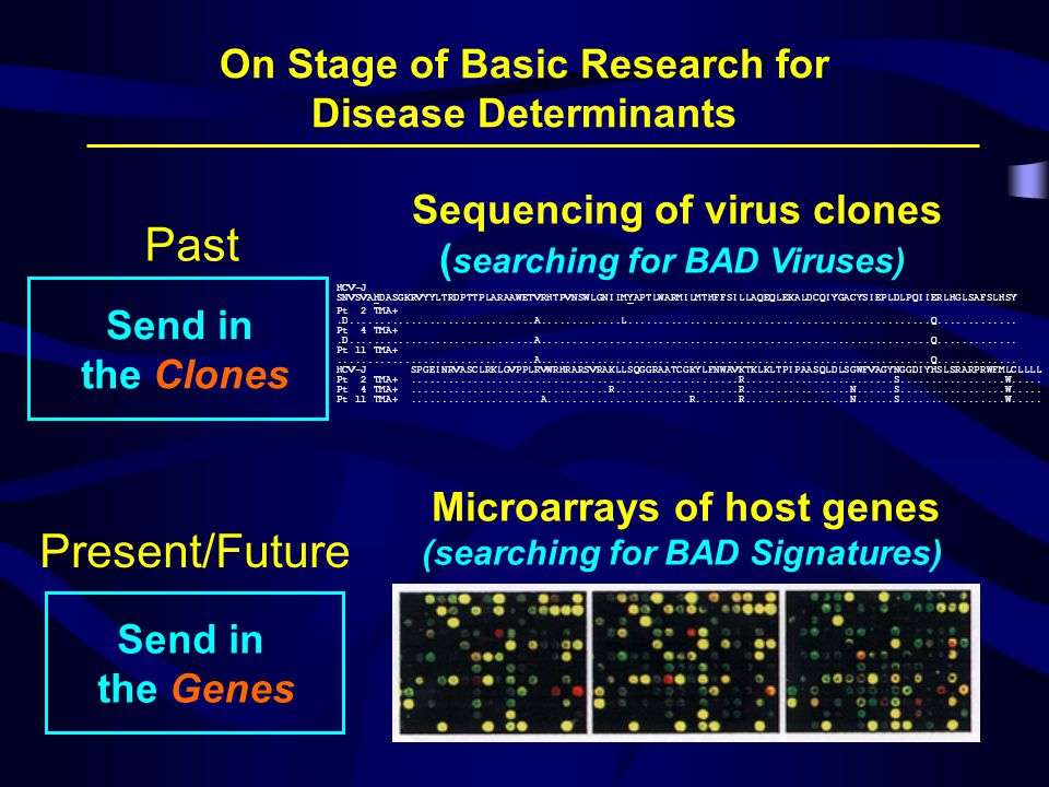 On Stage of Basic Research for Disease Determinants Send in the Clones Send in the Genes HCV-J SNVSVAHDASGKRVYYLTRDPTTPLARAAWETVRHTPVNSWLGNIIMYAPTLWARMILMTHFFSILLAQEQLEKALDCQIYGACYSIEPLDLPQIIERLHGLSAFSLHSY Pt 2 TMA+.D..............................A.............L.................................................Q.............
