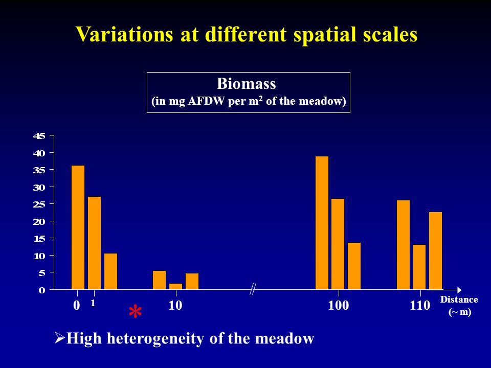 Variations at different spatial scales Biomass (in mg AFDW per m 2 of the meadow) 0 1 10 100110 Distance (~ m)  High heterogeneity of the meadow *